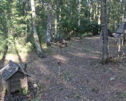 umbria-tour-guide-bosco